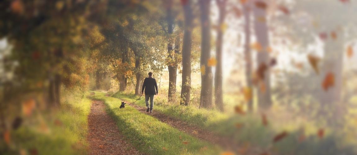 Gemeinsame Spaziergänge